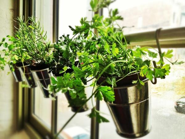 kräuterpflanzen in der küche