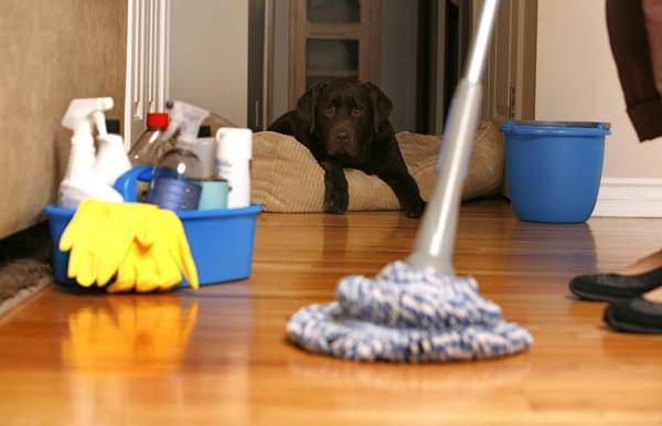 laminatboden und teppich selber reinigen
