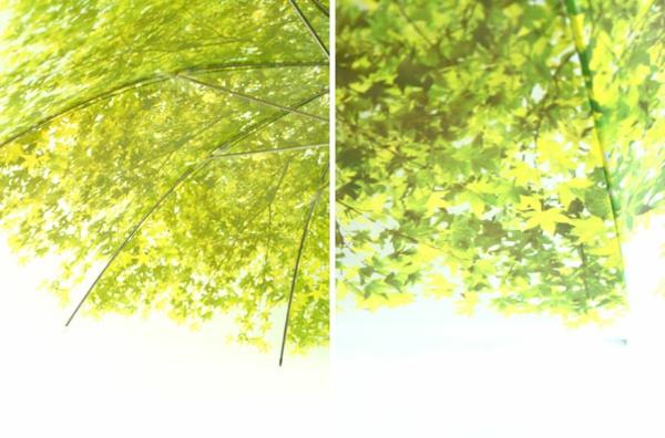 lustige regenschirme grün laub baumkrone