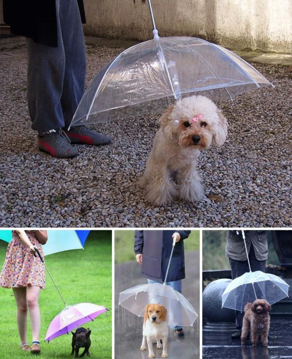 lustige regenschirme haustiere hunde