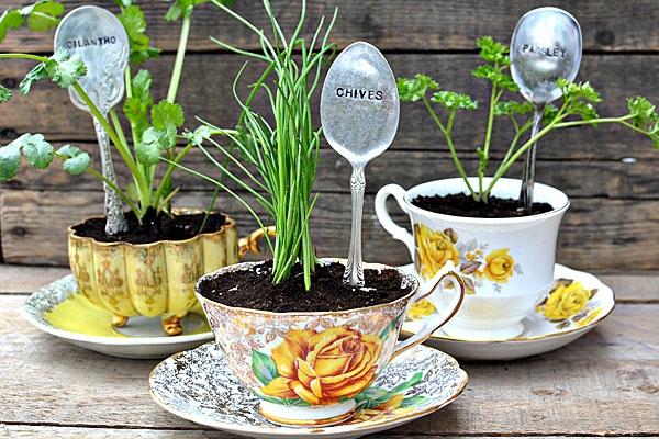 tassen für kräuterpflanzen