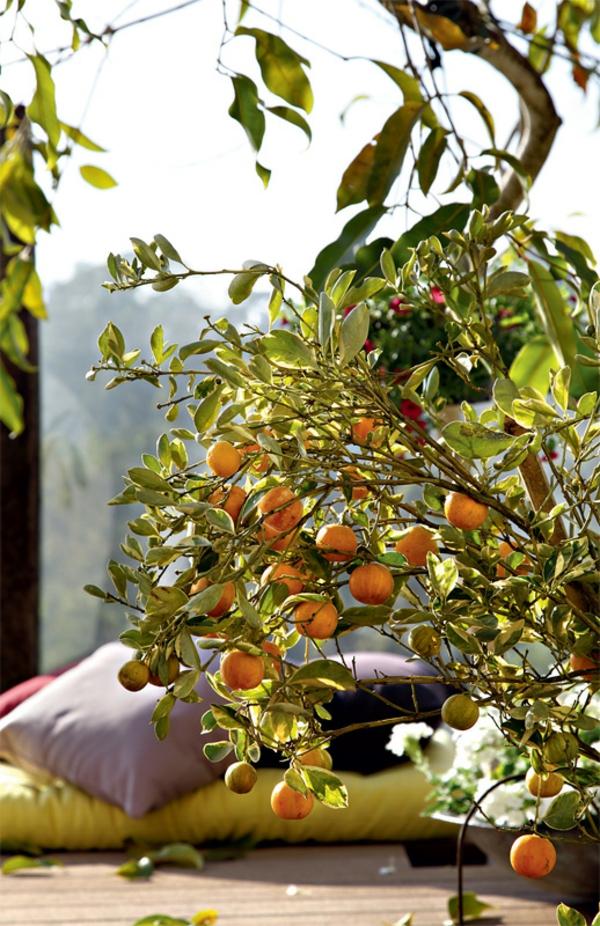 terrassengestaltung modern balkonpflanzen zimmerbäumchen orangenbaum