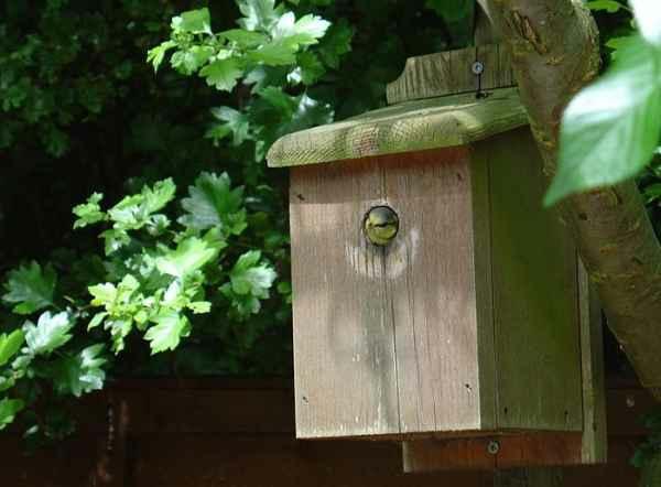 tolles vogelhaus selber bauen