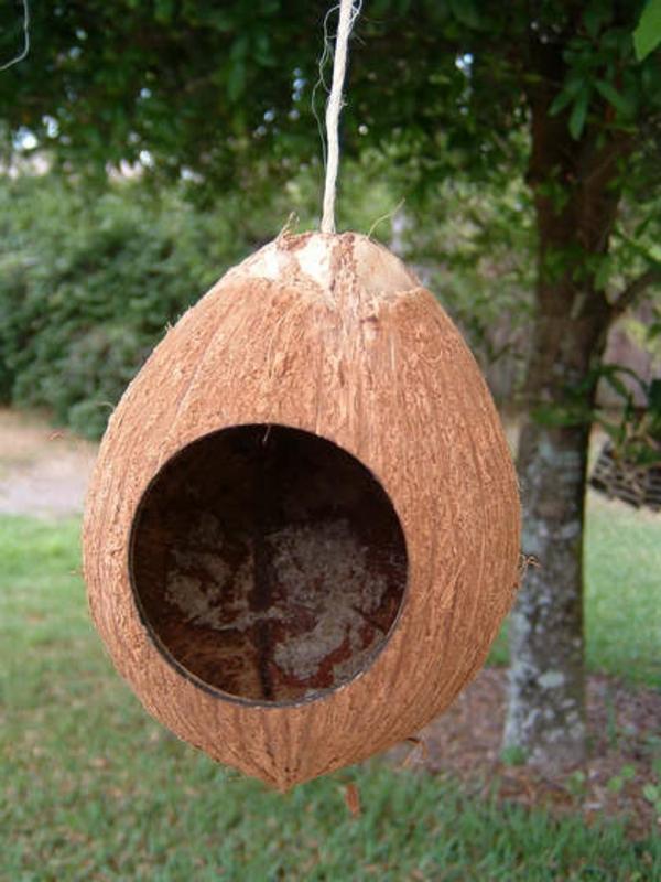 vogelhaus selbe bauen aus kokosnuss