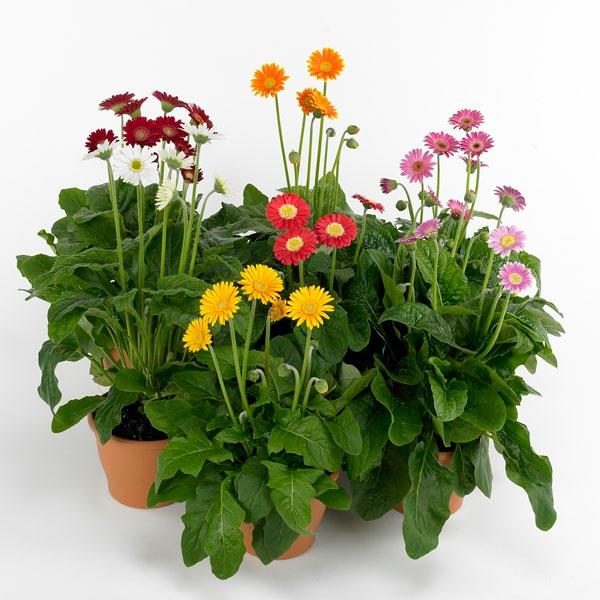 beautiful wohnzimmer pflanzen schattig wohnzimmer pflanzen wenig licht die zimmer with zimmer wenig licht - Wohnzimmer Pflanzen Schattig