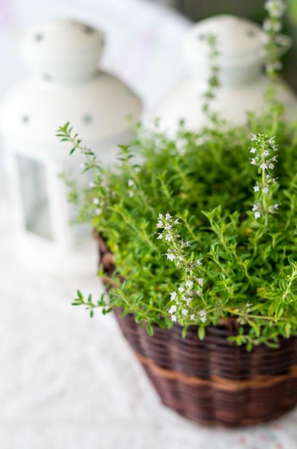 Zimmerpflanzen die wenig licht brauchen - Wandfarben arten ...