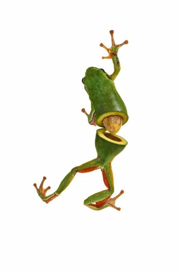 Animal Food Collagen von Tieren mit Obst und Gemüse frosch avocado