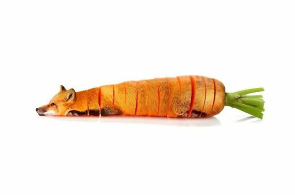 Animal-Food-Collagen-von-Tieren-mit-Obst-und-Gemüse-fuchs