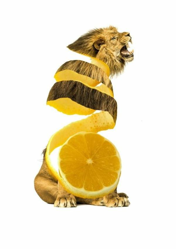 Animal Food Collagen Tieren mit Obst und Gemüse orange