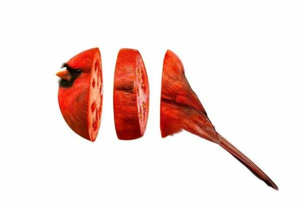 Animal Food Collagen von Tieren mit Obst und Gemüse vogel