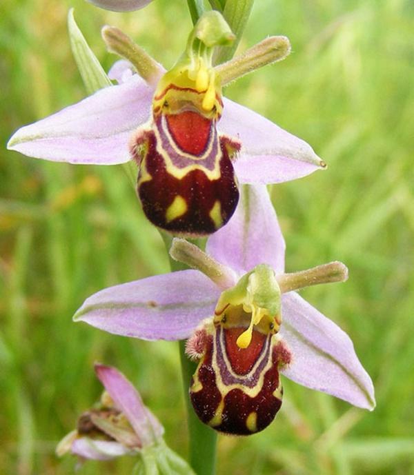 Blumenart Tiere aussehen bienen
