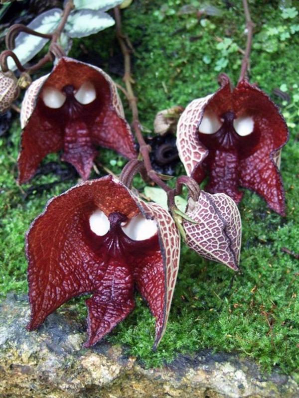 Blumenart Tiere aussehen dunkel rot