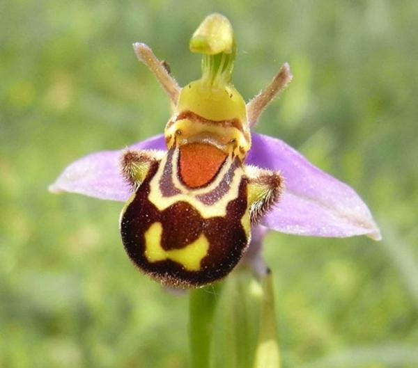 Blumenart biene Tiere aussehen farben muster
