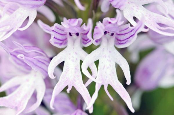 Blumenarten aussehen nackte männer
