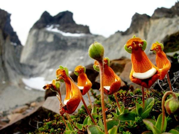 Blumenarten Tiere aussehen niedlich figuren