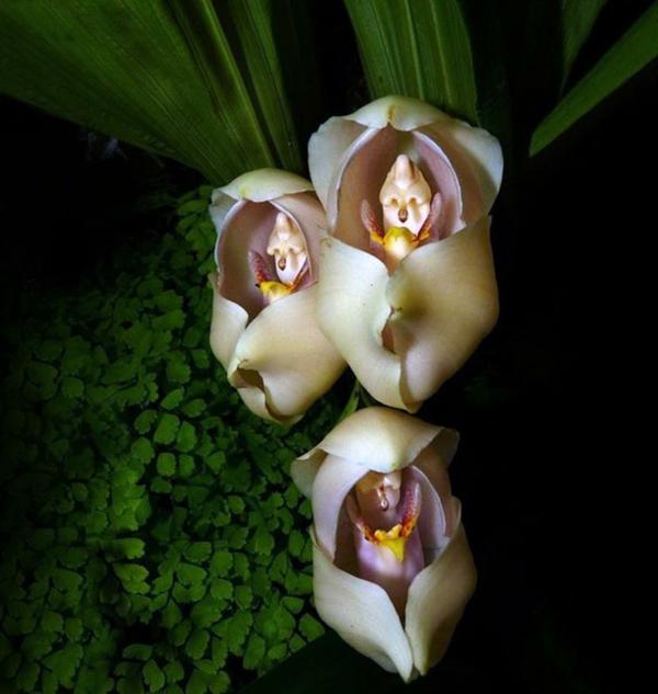 Blumenart Tiere aussehen originell anlocken