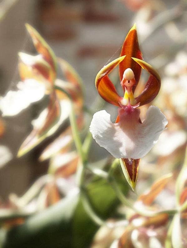 Blumenarten Tiere ballerine originell idee