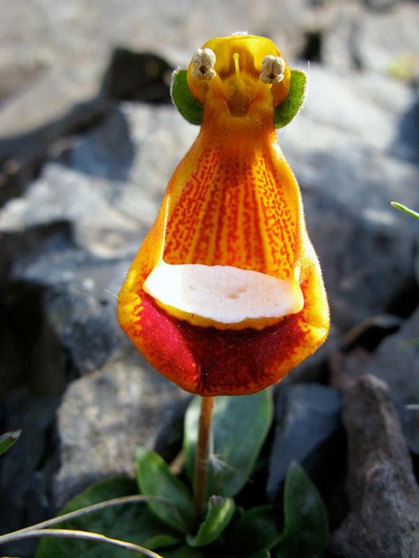Blumenart Tiere lustig alien aussehen pflanzen