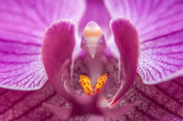 Blumenarten Tiere aussehen rosa vogel