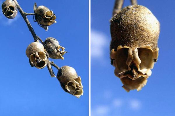 Blumen Tiere aussehen schädel mystisch