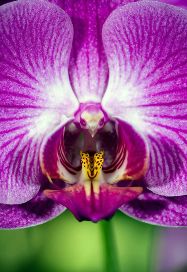 Blumenart  gesättigte farben Tiere aussehen vogel fliegen