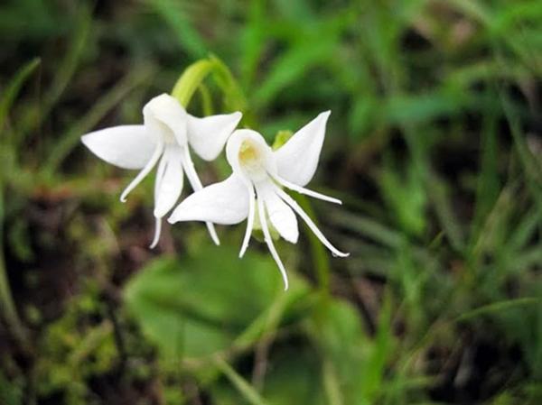 Blumen Tiere aussehen weiß design