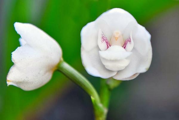 Blumen Tiere weiße tauben märchenhaft