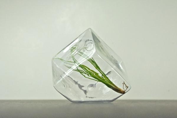 Moderne Pflanzgefäße für Luftpflanzen äshtetisch