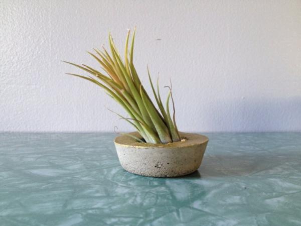 elegante Pflanzgefäße für Luftpflanzen beton