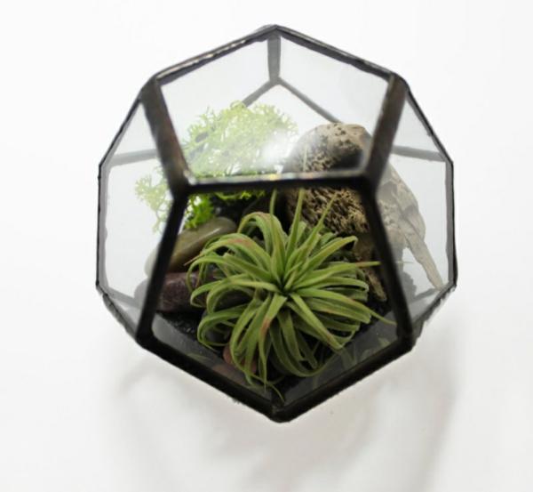 Moderne Pflanzgefäße für Luftpflanzen elegant