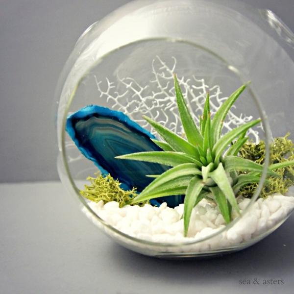 Moderne Pflanzgefäße für Luftpflanzen glas kiesel