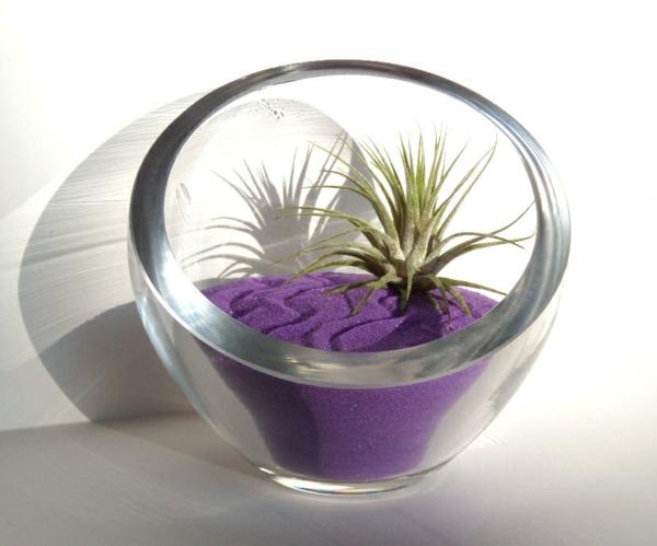 Moderne Pflanzgefäße für Luftpflanzen glas rund