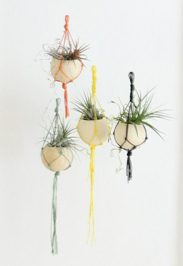 Moderne Pflanzgefäße für Luftpflanzen hängend