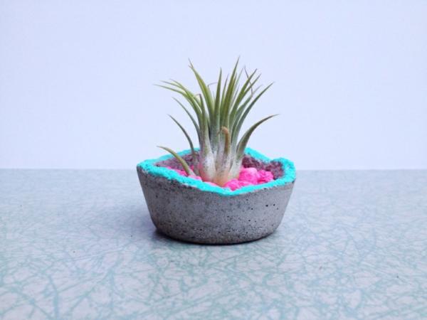 Moderne Pflanzgefäße für Luftpflanzen toll rand