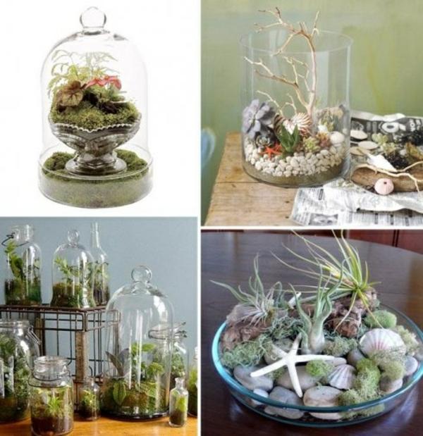 Pflegeleichte Zimmerpflanzen groß bilder topfpflanze