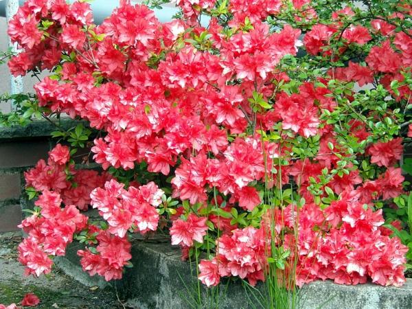groß bilder topfpflanzen blühend