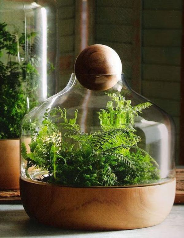 Pflegeleichte Zimmerpflanzen groß bilder topfpflanzen deko