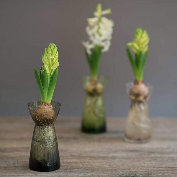 Pflegeleichte Zimmerpflanzen groß bilder topfpflanzen glas