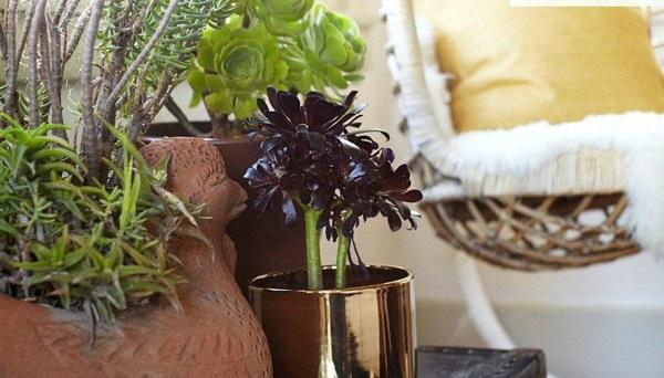 Pflegeleichte Zimmerpflanzen groß bilder topfpflanzen idee