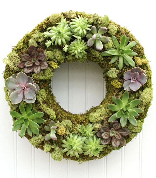 Pflegeleichte Zimmerpflanzen groß bilder topfpflanzen kranz