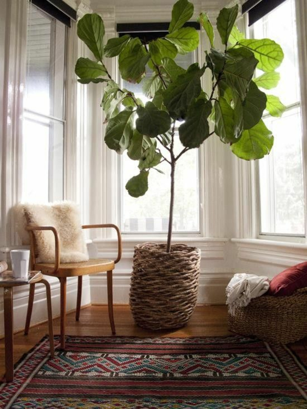 Pflegeleichte Zimmerpflanzen groß bilder topfpflanzen raum
