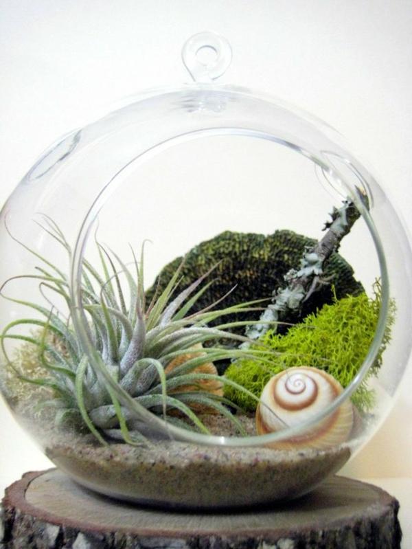 Pflegeleichte Zimmerpflanzen groß bilder topfpflanzen sand