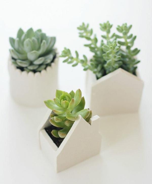 geometrisch Zimmerpflanzen groß bilder topfpflanzen töpfe