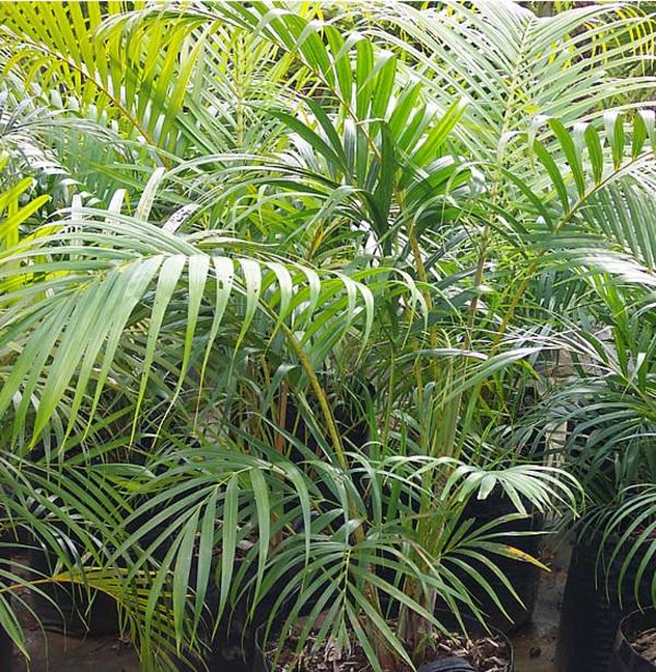 Pflegeleichte Zimmerpflanzen groß bilder topfpflanzen wild