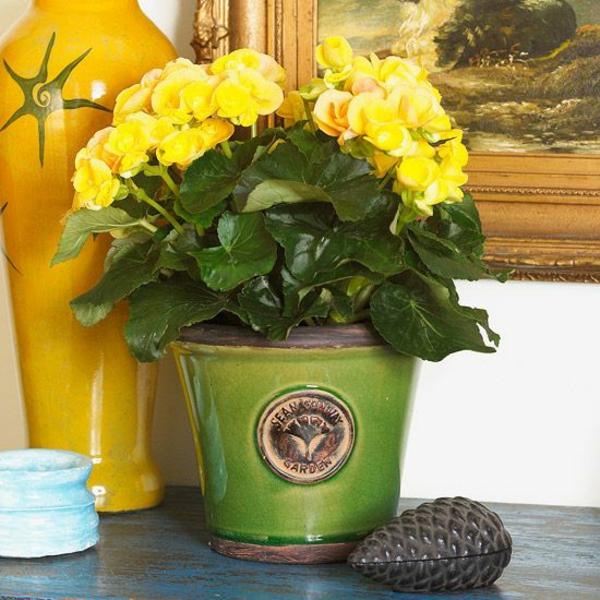 blühende zimmerpflanzen topfpflanze gelbe blüten