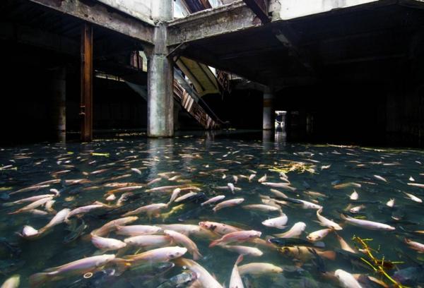 erde und mensch naturbilder alte gebäude grundrisse wasser fische