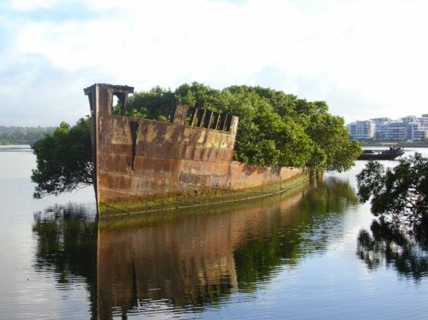 erde und mensch naturbilder altes schiff grün bepflanzt geröstet