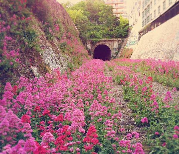 erde und mensch naturbilder blumen tunnel