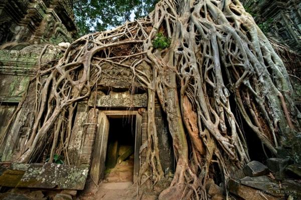erde und mensch naturbilder kambodscha angkor baumwurzeln