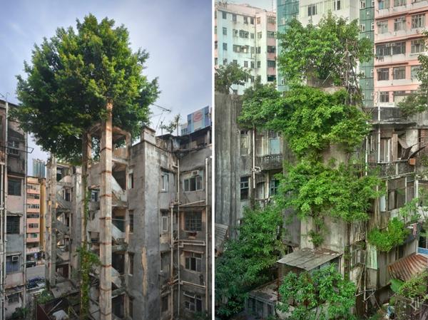 erde natur und mensch naturbilder stadtviertel alte gebäude bäume